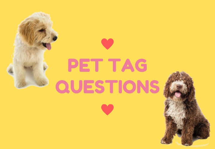 Pet Tag Questions